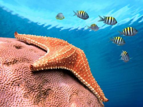 Подводный мир 6257
