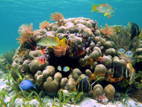 Подводный мир 6258