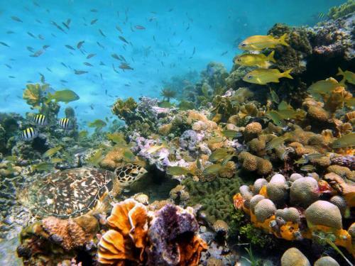 Подводный мир 6260