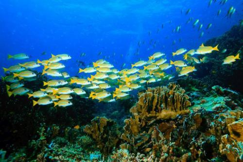 Подводный мир 6261