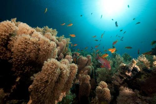 Подводный мир 6262