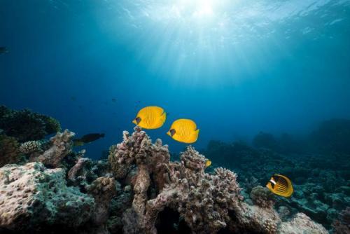 Подводный мир 6264