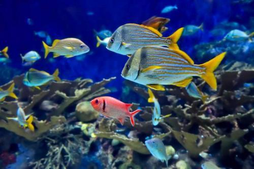 Подводный мир 6266