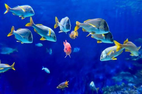 Подводный мир 6267