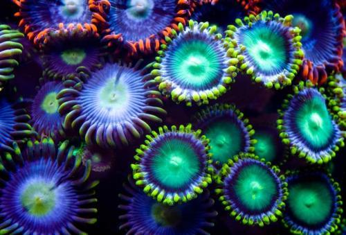 Подводный мир 6270