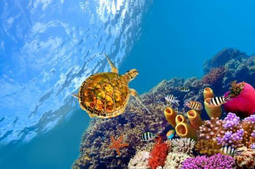 Подводный мир 6272