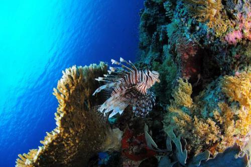 Подводный мир 6273