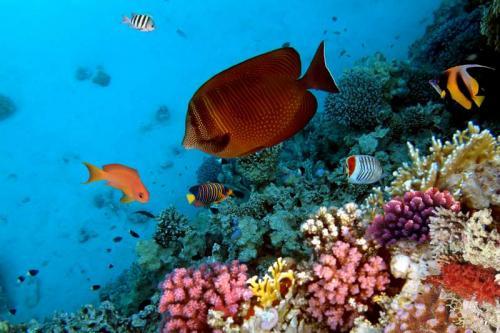 Подводный мир 6274