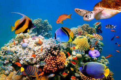 Подводный мир 6275