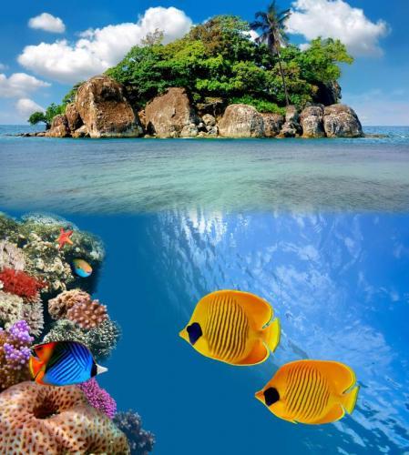 Подводный мир 6276