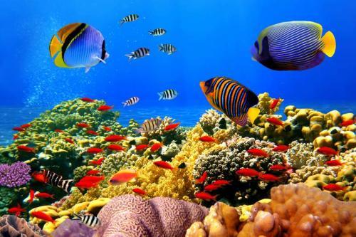 Подводный мир 6277