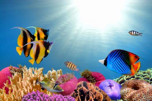 Подводный мир 6278