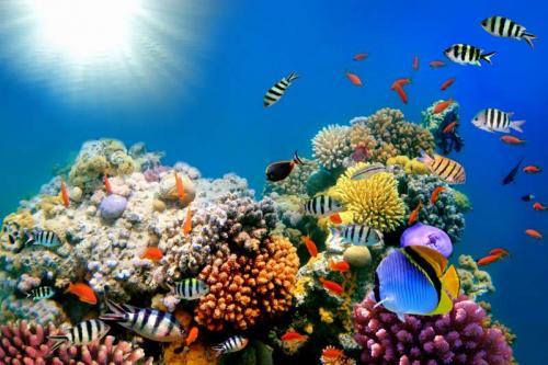 Подводный мир 6279
