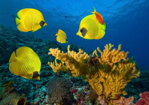 Подводный мир 6280