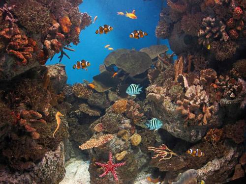 Подводный мир 6281