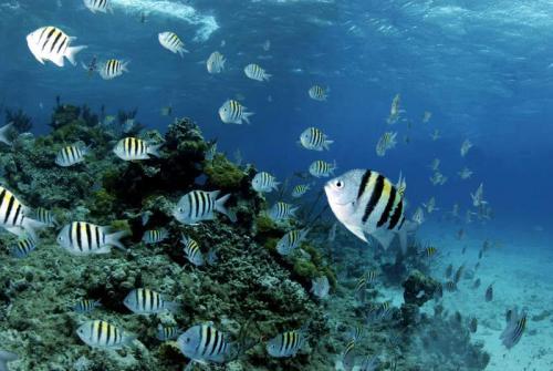 Подводный мир 6283