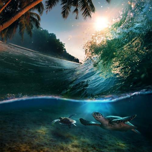 Подводный мир 9649