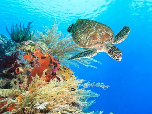 Подводный мир 9655