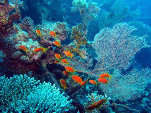 подводный мир 203