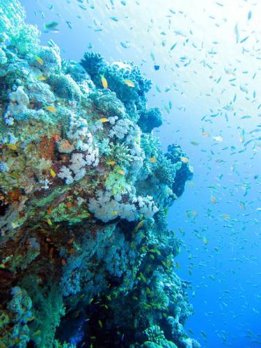 подводный мир 204