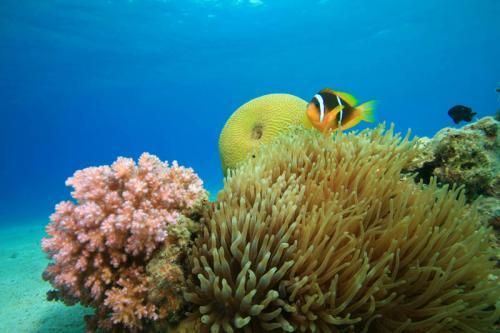 подводный мир 205