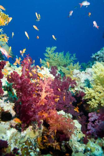подводный мир 206