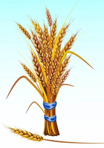 Пшеница 1003