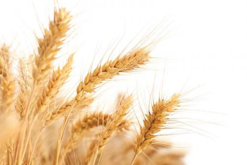 Пшеница 5972