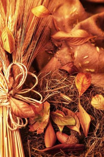 Пшеница 5975