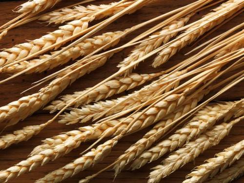 Пшеница 5977