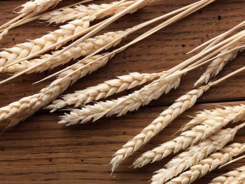 Пшеница 5979