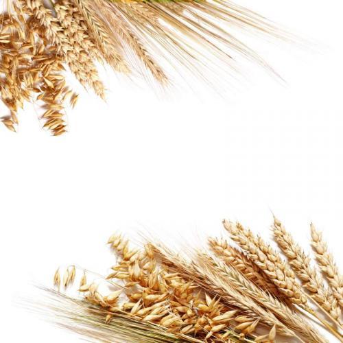Пшеница 5988