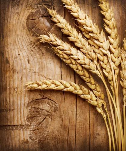Пшеница 5992