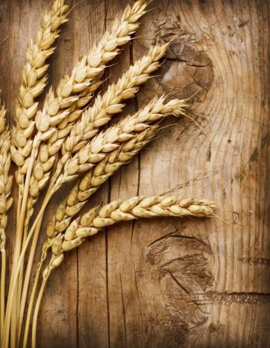 Пшеница 5994