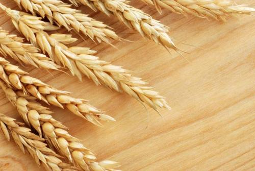 Пшеница 5996