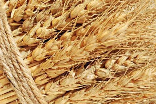Пшеница 5997