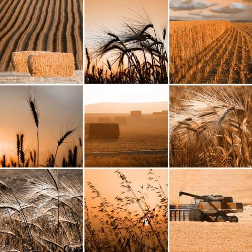 Пшеница 5999