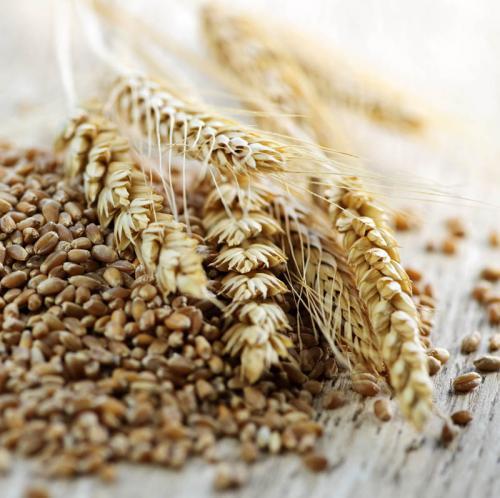 пшеница 375