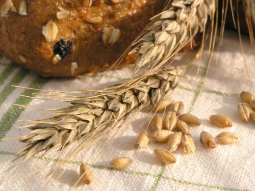 Пшеница 376