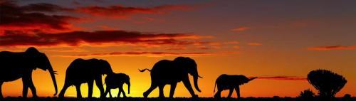 Животный мир  8637
