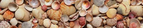 Пляжи  8685