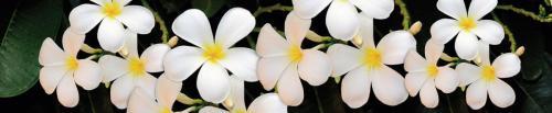 Цветы  344