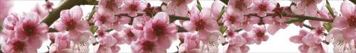 цветы  170 1