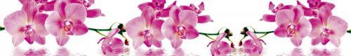 цветы  201 роз