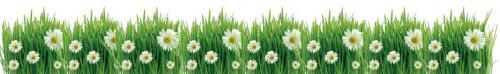 цветы  233