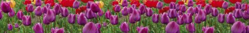 цветы  439