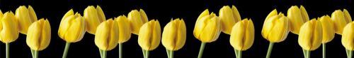 цветы  444