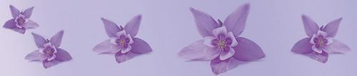 цветы  471