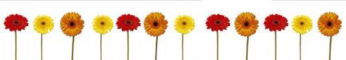 цветы  474