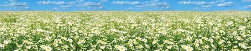 цветы  478